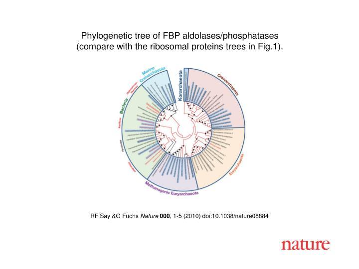 Phylogenetic tree of FBP aldolases/phosphatases