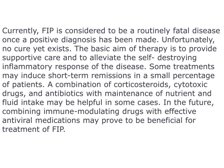 Currently, FIP is considered to be a routinely fatal disease once a positive diagnosis has been made. Unfortunately, no cure yet exists. The basic aim of therapy is to provide supportive care and to alleviate the self- destroying inflammatory response of the disease. Some treatments may induce short-term remissions in a small percentage of patients. A combination of corticosteroids, cytotoxic drugs, and antibiotics with maintenance of nutrient and fluid intake may be helpful in some cases. In the future, combining immune-modulating drugs with effective antiviral medications may prove to be beneficial for treatment of FIP.