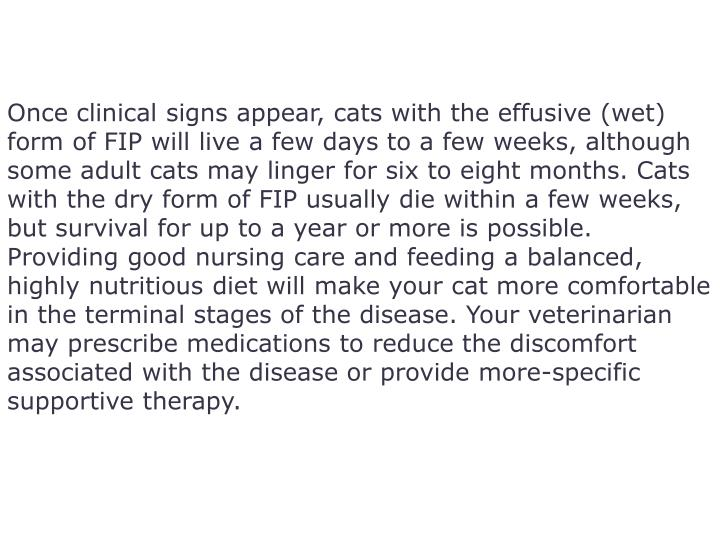 Once clinical signs appear, cats with the effusive (wet) form of FIP will live a few days to a few weeks, although some adult cats may linger for six to eight months. Cats with the dry form of FIP usually die within a few weeks, but survival for up to a year or more is possible.