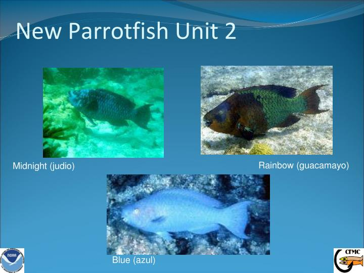 New Parrotfish Unit 2