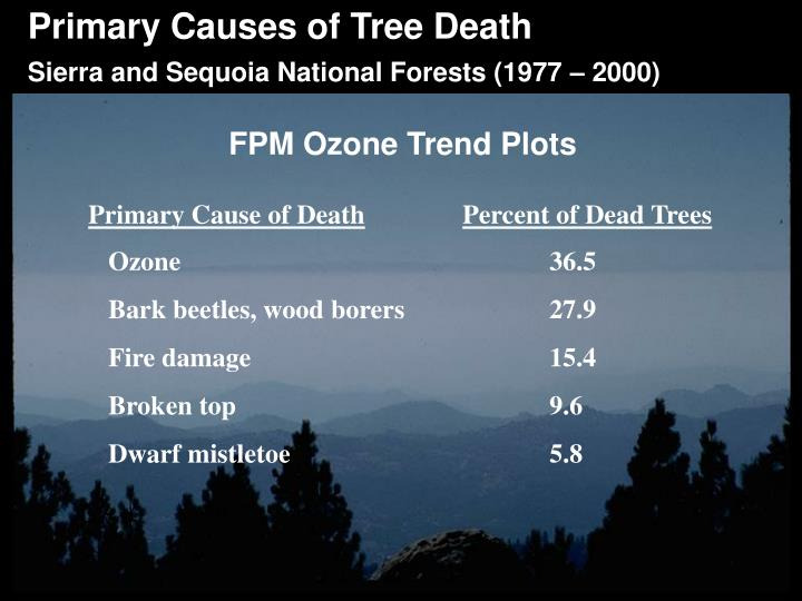 Primary Causes of Tree Death