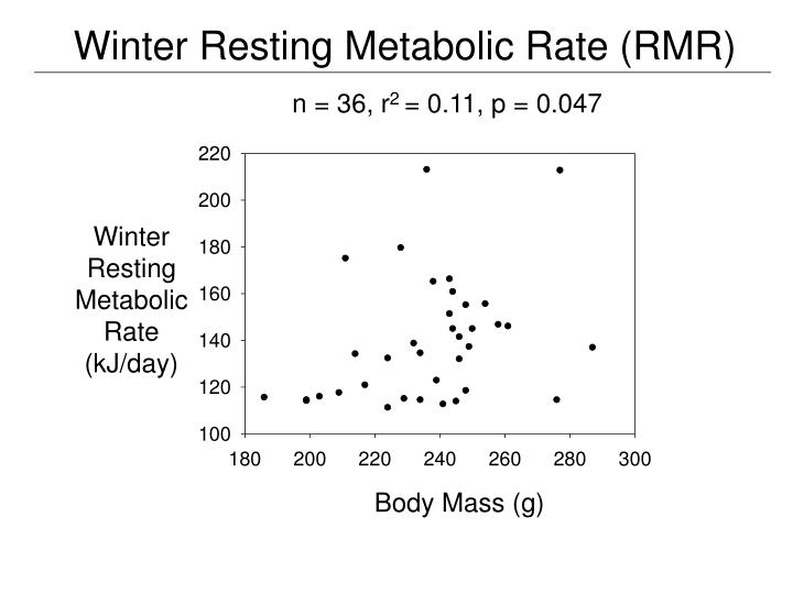Winter Resting Metabolic Rate (RMR)