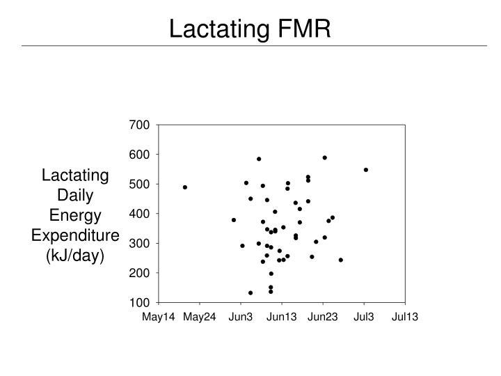 Lactating FMR