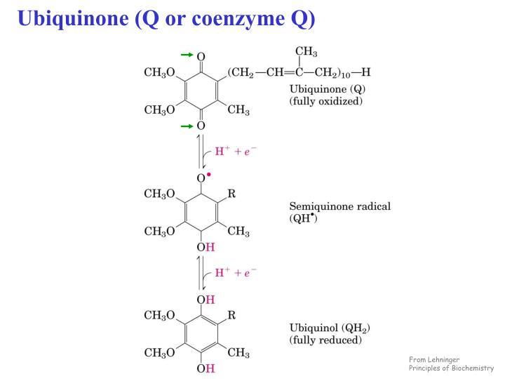 Ubiquinone (Q or coenzyme Q)