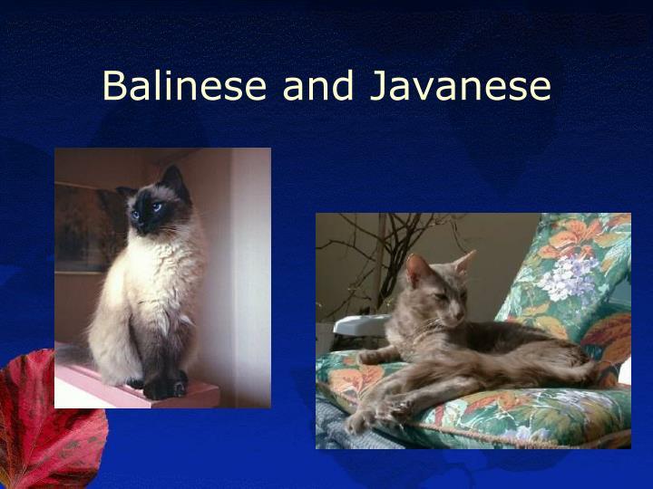 Balinese and Javanese
