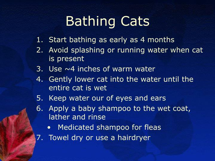Bathing Cats