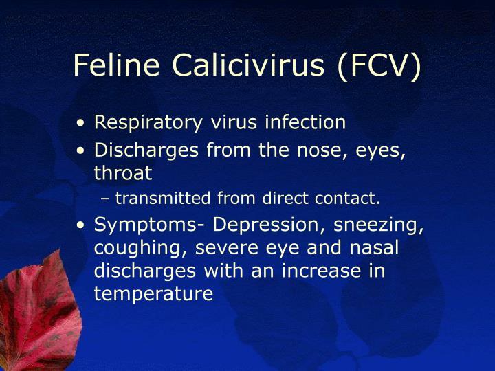 Feline Calicivirus (FCV)