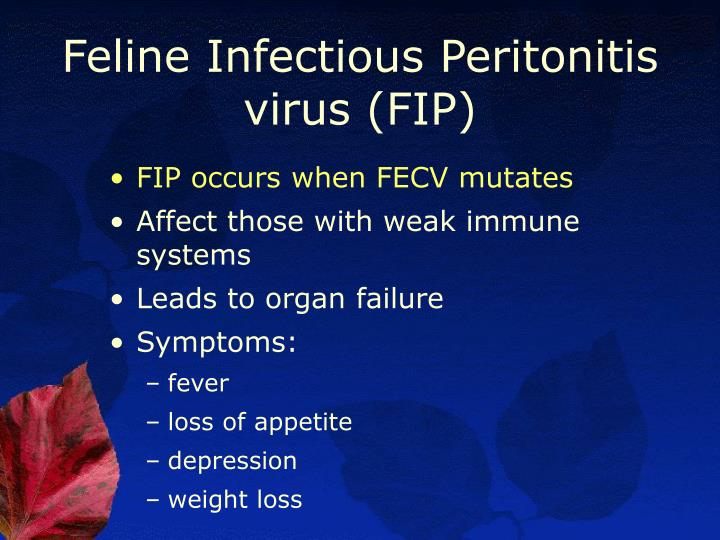 Feline Infectious Peritonitis virus (FIP)