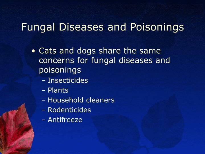 Fungal Diseases and Poisonings