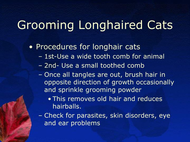 Grooming Longhaired Cats