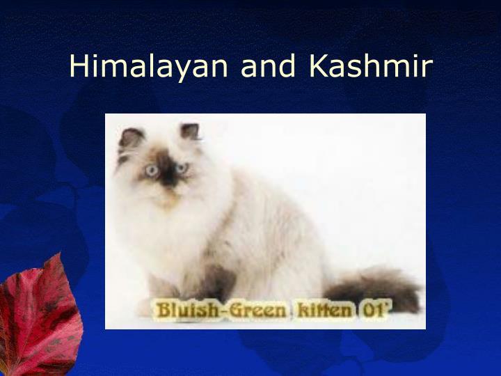 Himalayan and Kashmir