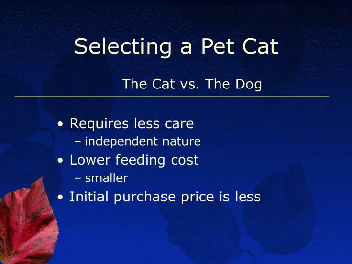 Selecting a Pet Cat
