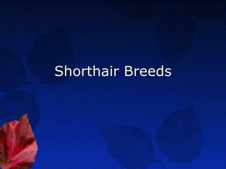 Shorthair Breeds