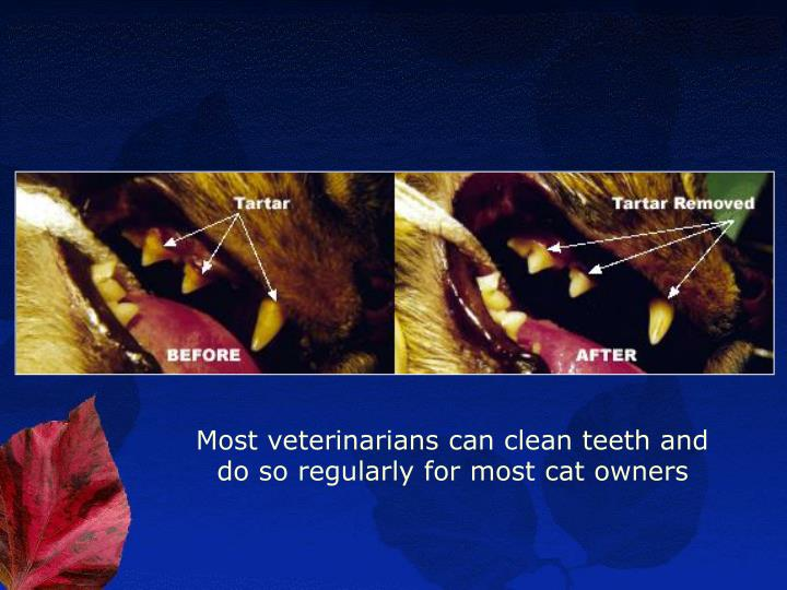 Most veterinarians can clean teeth and do so regularly for most cat owners
