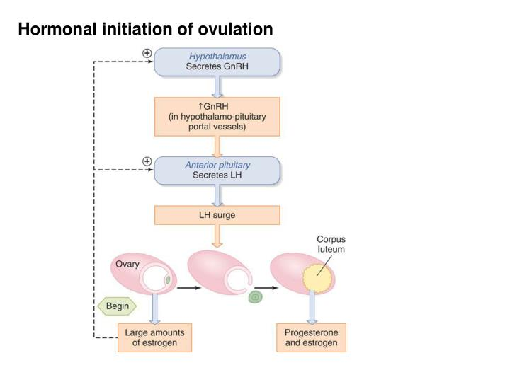 Hormonal initiation of ovulation