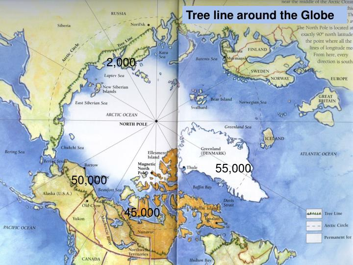 Tree line around the Globe