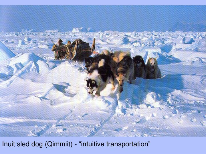 "Inuit sled dog (Qimmiit) - ""intuitive transportation"""