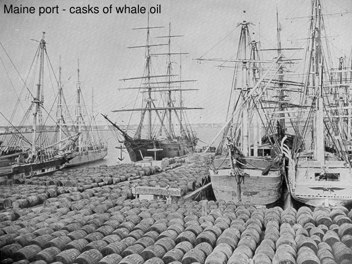 Maine port - casks of whale oil