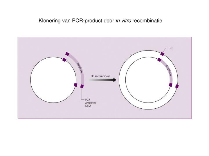 Klonering van PCR-product door