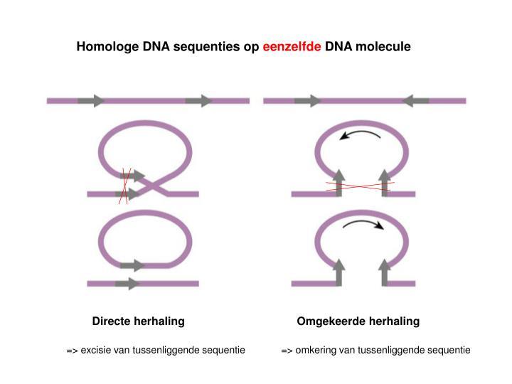Homologe DNA sequenties op