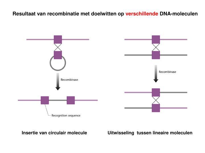 Resultaat van recombinatie met doelwitten op