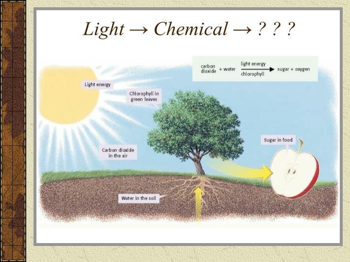 Light → Chemical → ? ? ?
