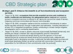 cbd strategic plan3