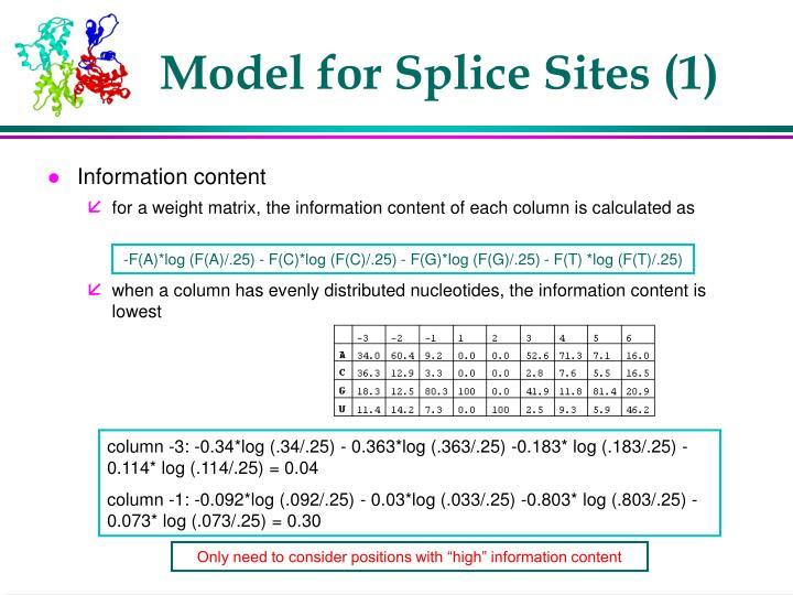 Model for Splice Sites (1)