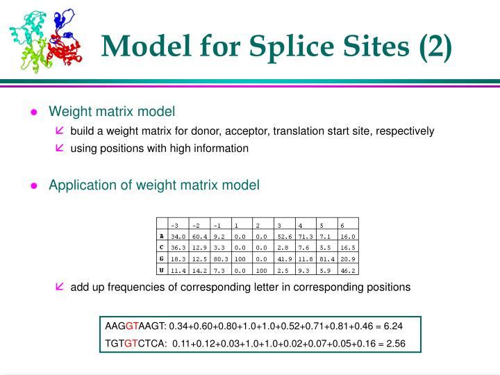 Model for Splice Sites (2)