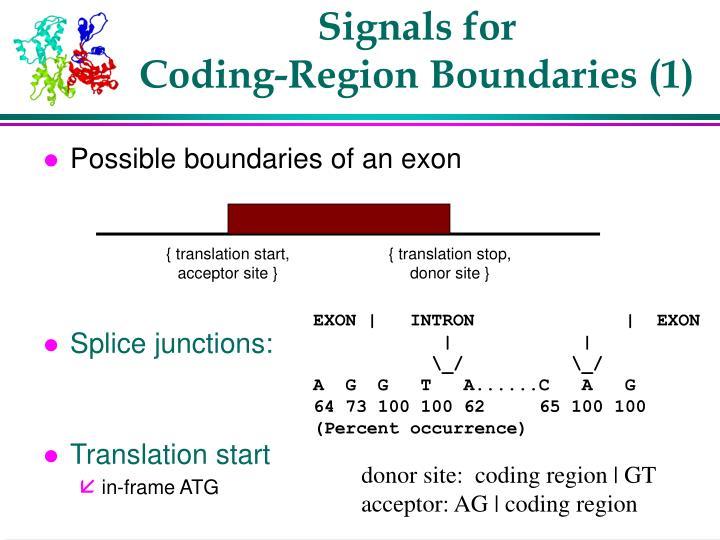 { translation start, acceptor site }