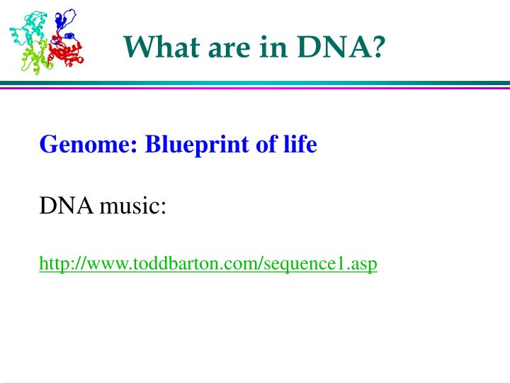 What are in DNA?