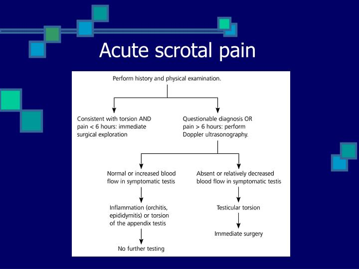 Acute scrotal pain