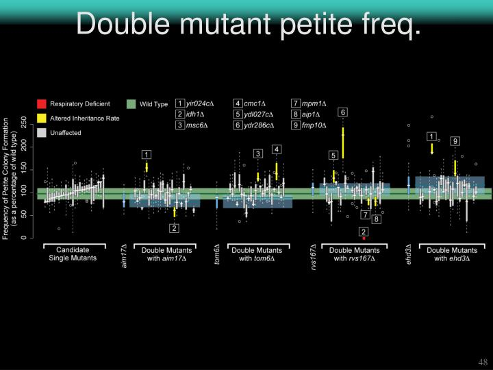 Double mutant petite freq.