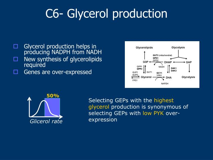 Glycerol production helps in producing NADPH from NADH