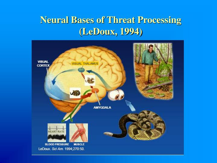 Neural Bases of Threat Processing