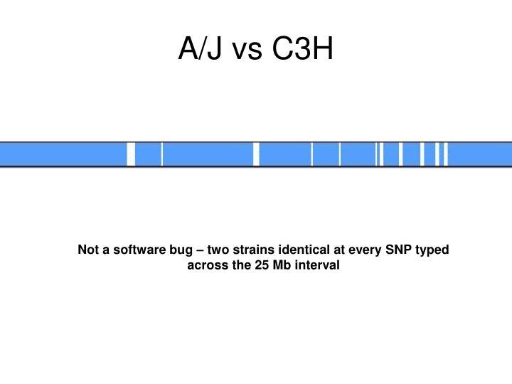 A/J vs C3H