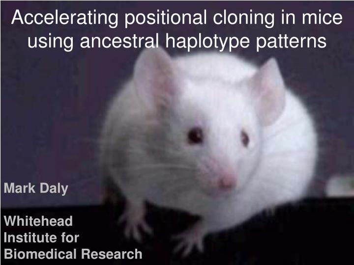 Accelerating positional cloning in mice using ancestral haplotype patterns