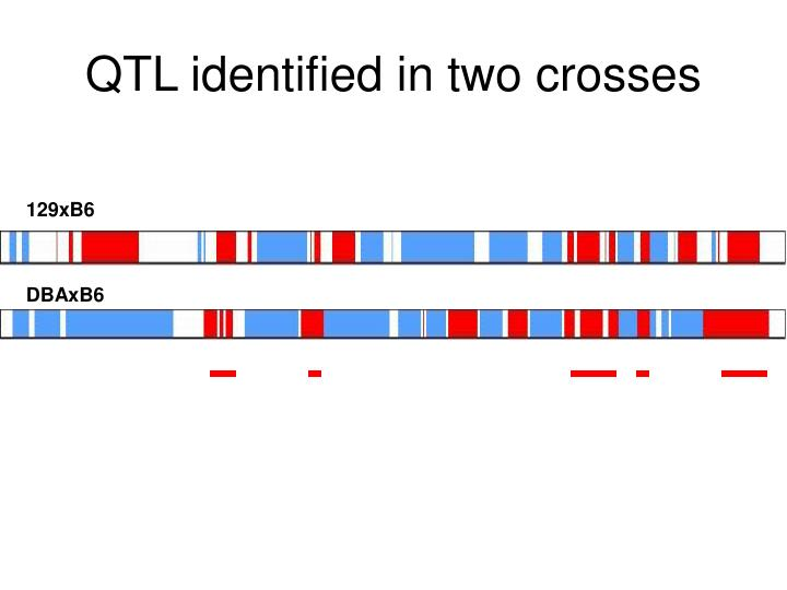QTL identified in two crosses