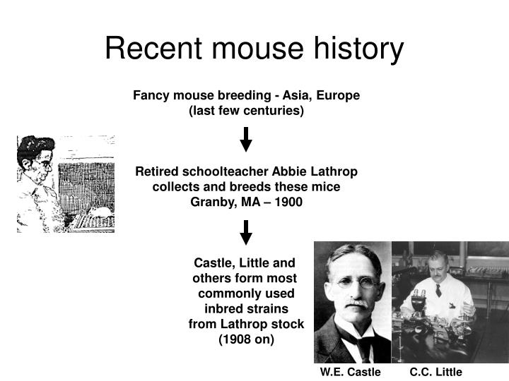 Recent mouse history