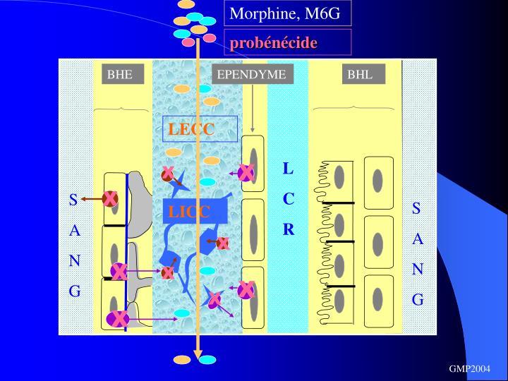 Morphine, M6G