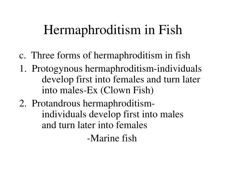 Hermaphroditism in Fish