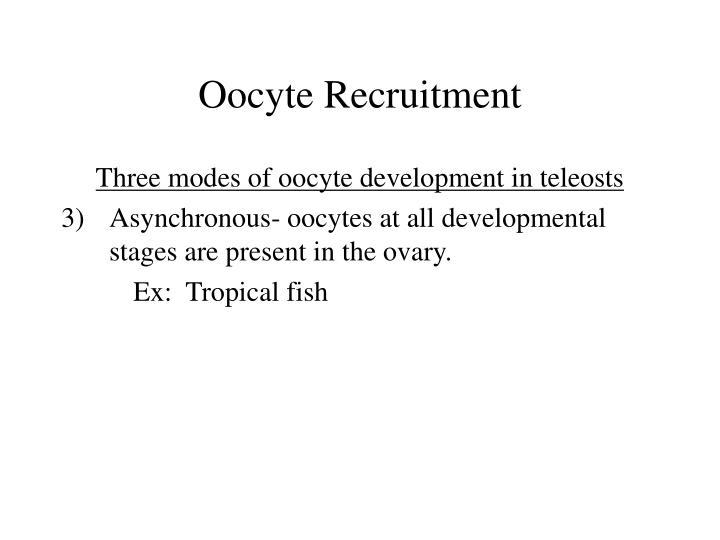 Oocyte Recruitment