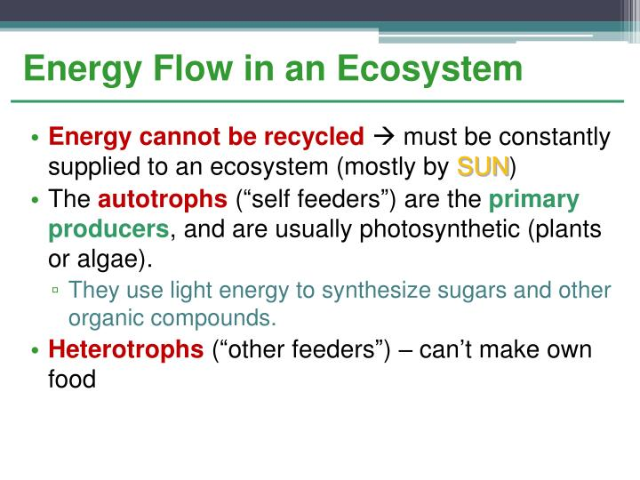 Energy Flow in an Ecosystem