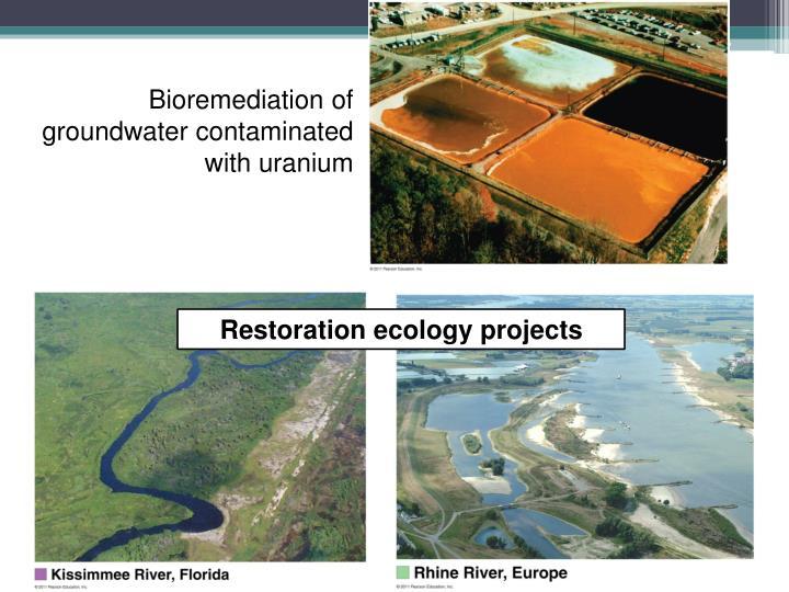 Bioremediation of groundwater contaminated with uranium