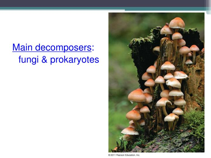 Main decomposers