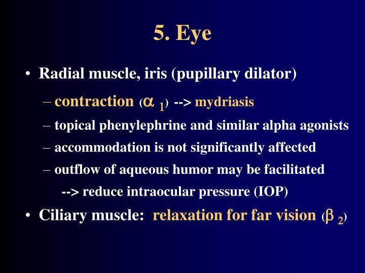 5. Eye