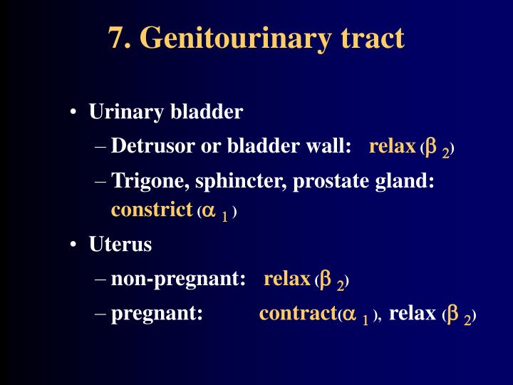 7. Genitourinary tract