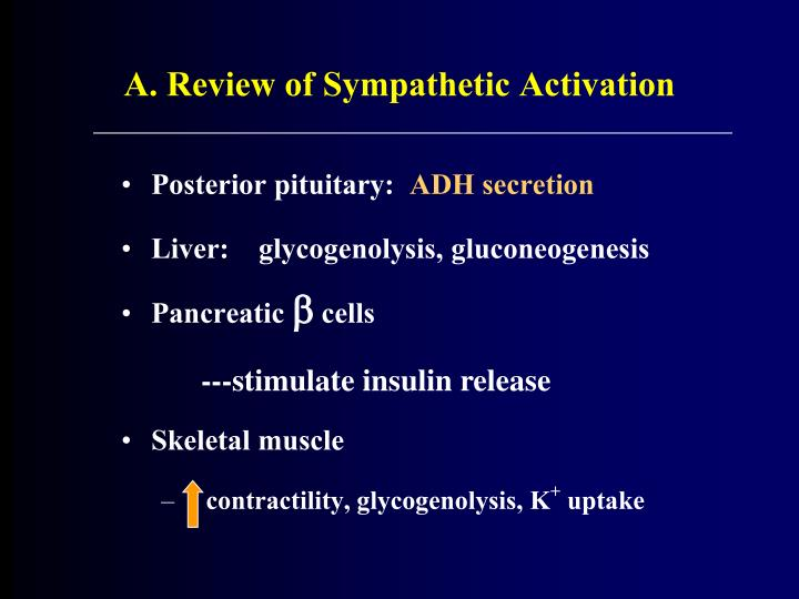 A. Review of Sympathetic Activation