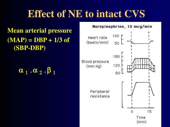 Effect of NE to intact CVS