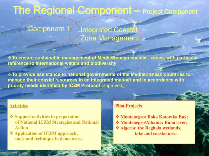 The Regional Component –